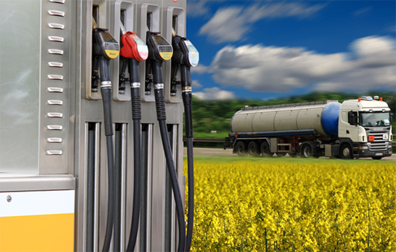 Cold Flow Improver for Biofuels