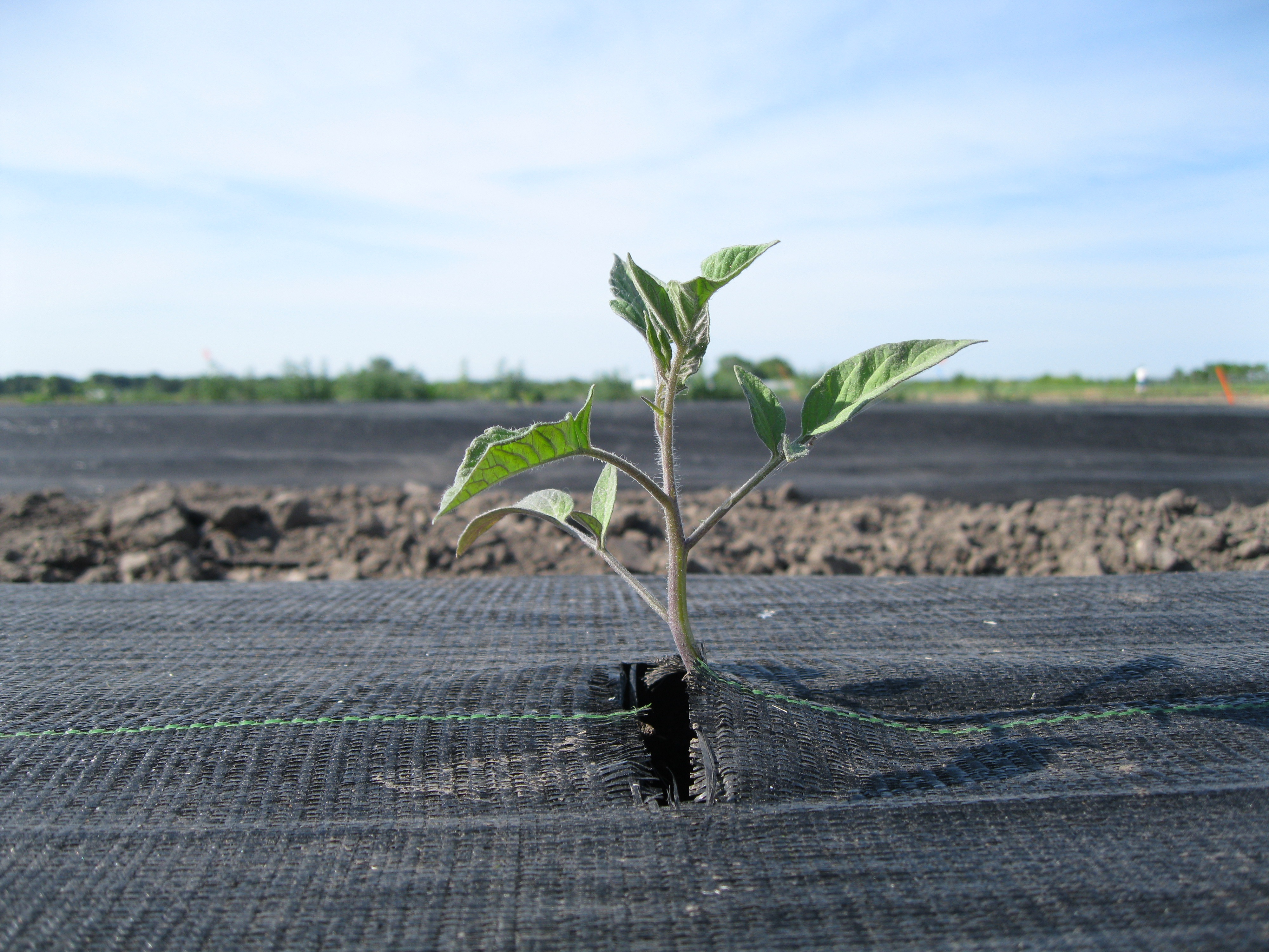 Clariant's solutions awarded with the OK compost INDUSTRIAL and OK biodegradable SOIL certificatio...